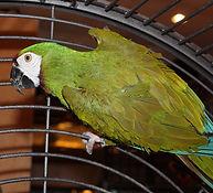 Severe Macaw 2   _edited.jpg