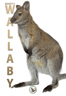 wallabyposter.jpg