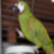 Severe Macaw 5   _edited.jpg