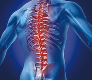 spine image 3.jpg
