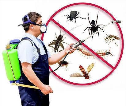 pest-control_edited.jpg