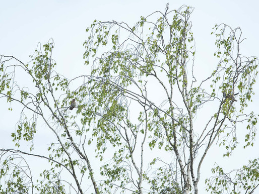 Verbrannte August Natur - wir erinnern uns an das maigrün.