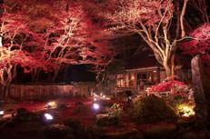 長浜観光地 利用許可済画像_210616_1.jpg