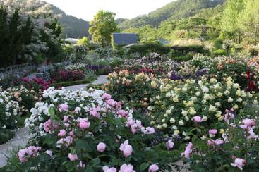 rosegarden_5月.JPG