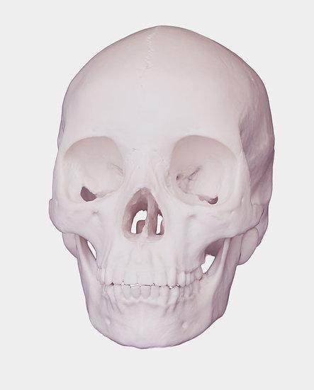Skull on White, Archival Ink Jet Print