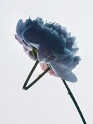 Flor No. 1