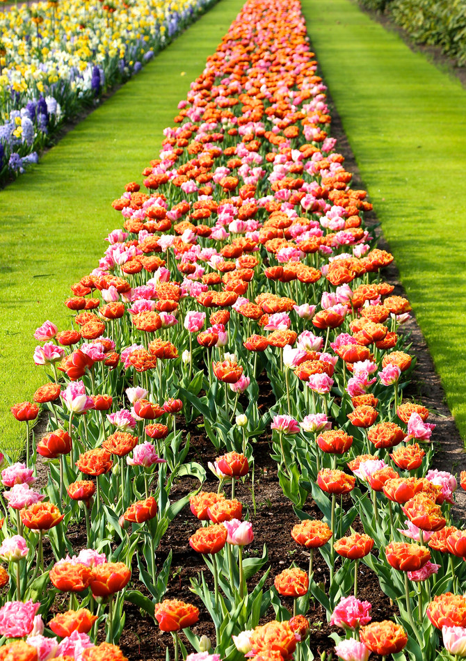 Holland - Tulip Fields and Gardens