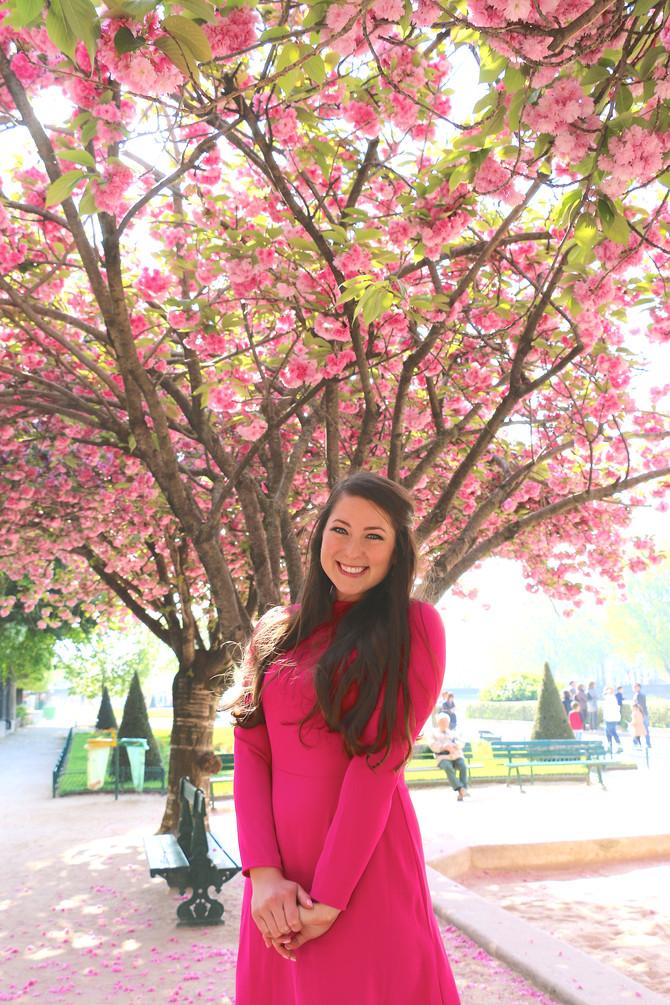 Paris - Notre Dame & Cherry Blossoms