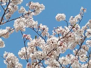 桜|園舎の設計