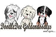 Goldendoodles, sheepadoodles, bernedoodles