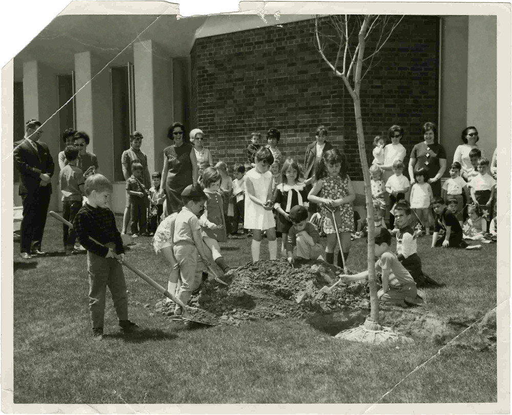 Planting trees in Beth Emeth garden, Bathurst Manor, 1960s