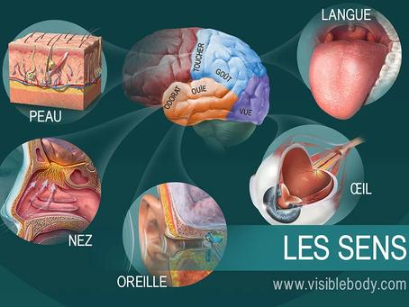 Organes sensoriels et mécanismes réflexes de survie