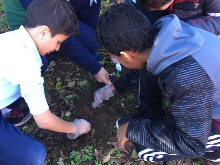 """Fifth-grade students get their hands dirty in an """"Organism Dig"""""""