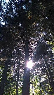 Field of Trees Farm_spotlight_button_3.jpg