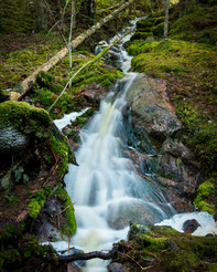 Tyresta National Park