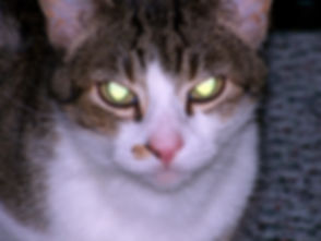 cat-17948_960_720.jpg