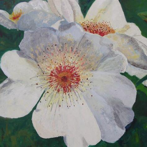 Botanische roos