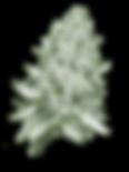WMC-Bud 3 green tint.png