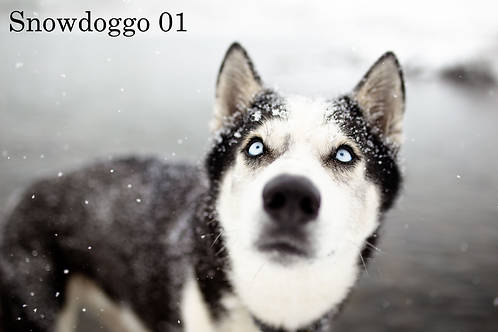 Snowdoggo Presets