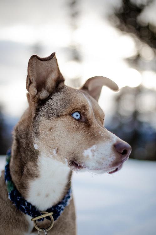 Snowdoggo // Breckdoggo Preset Bundle
