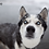 Thumbnail: Snowdoggo Presets