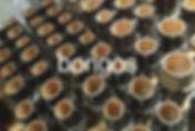 Tycoon Bongos 2.jpg