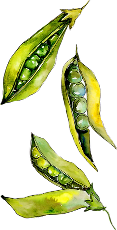 Canstock Peas_edited.png