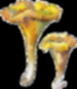 Canstock Mushrooms.png