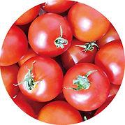 トマト250サークル.jpg