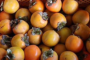 収穫柿310.jpg