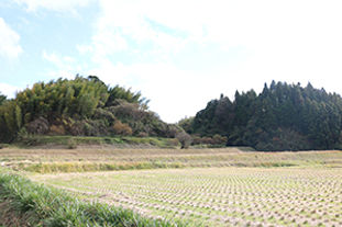 農地310.jpg