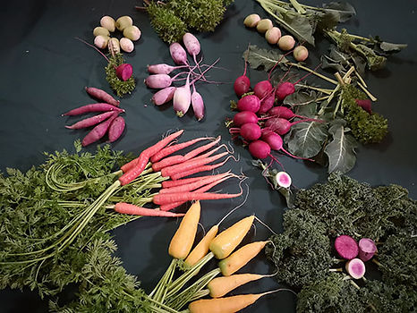 野菜集合550.jpg