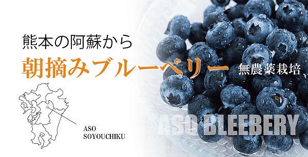 ブルーベリー980×500イメージ.jpg