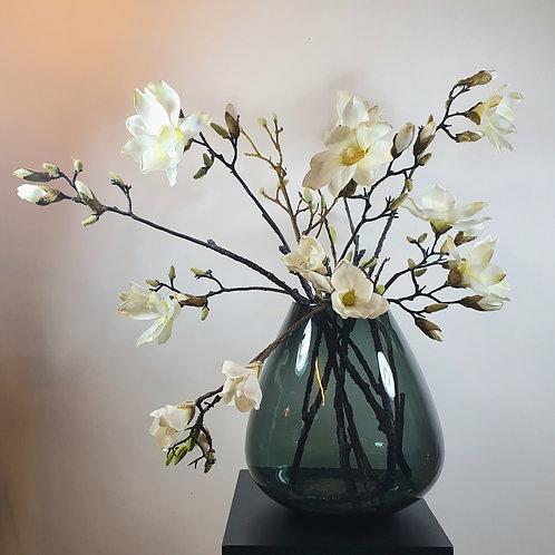 Magnolia wit