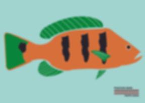 Peacock Bass.jpg