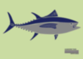 albacore tuna.jpg