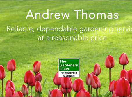 Making Broadstone beautiful (one garden at a time)