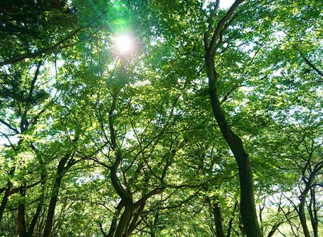 森のキャンプ場の楽しみ