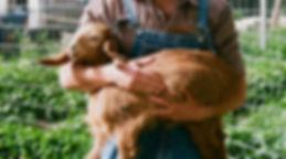L'agriculteur détenant chèvre