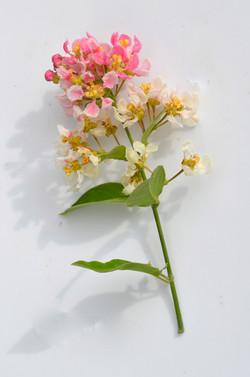 Banisteriopsis caapi flower