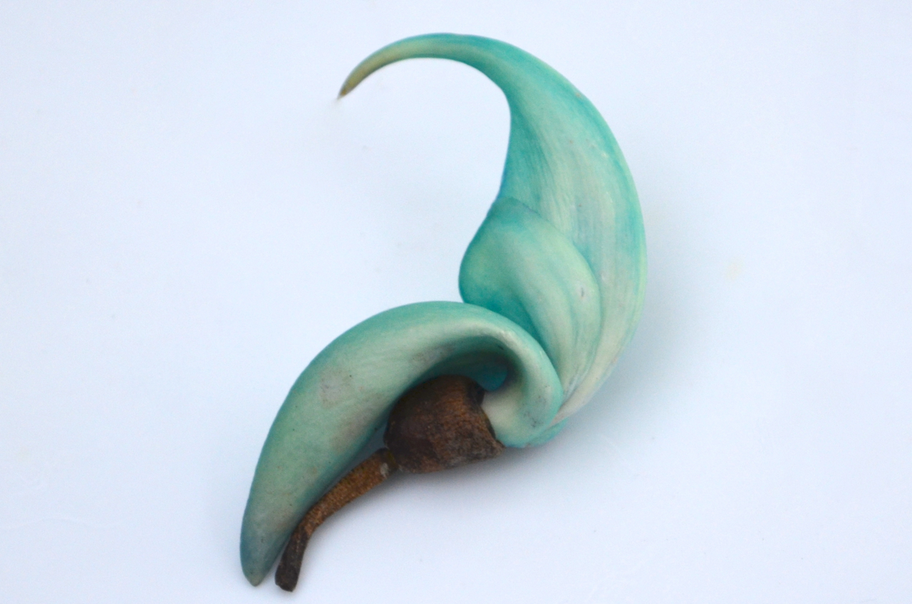 Jade vine flower, Hawaii