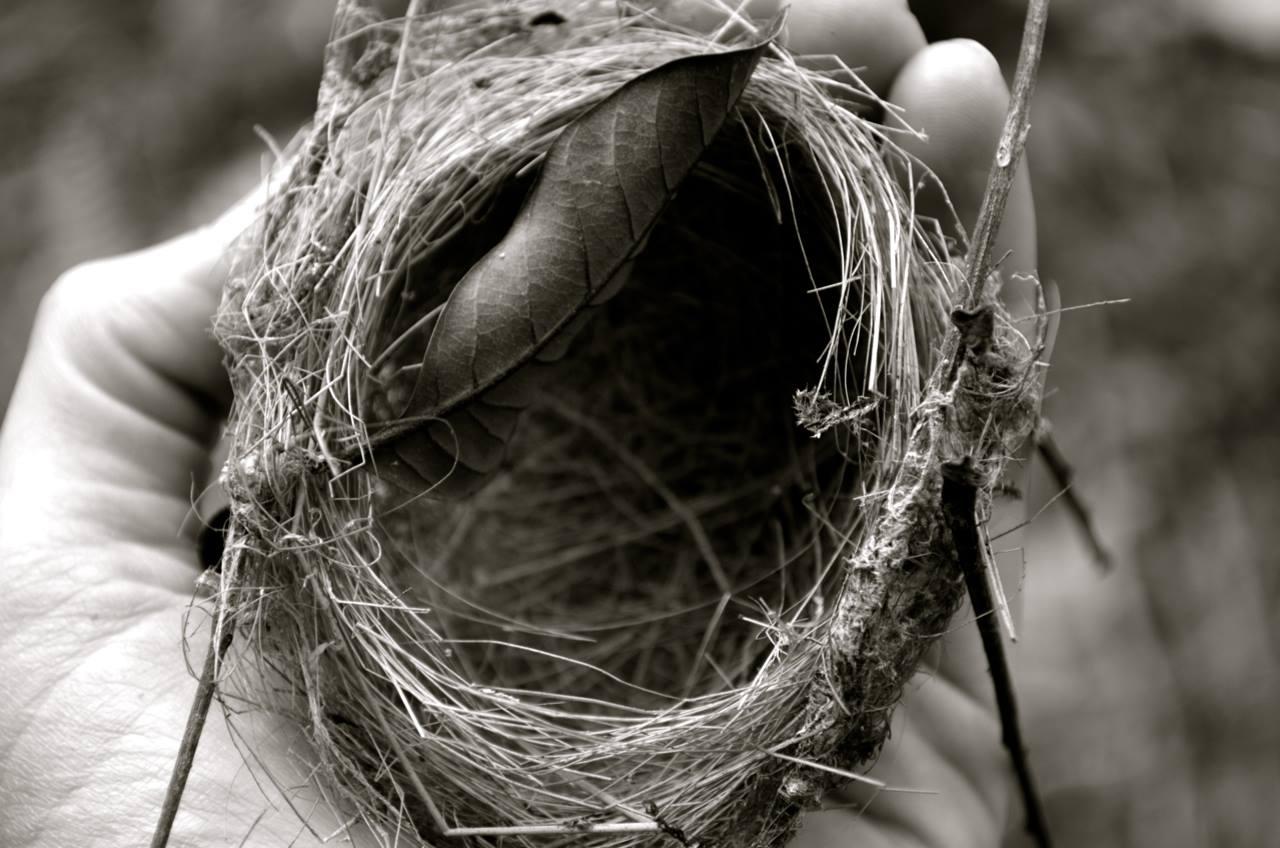 Nest!