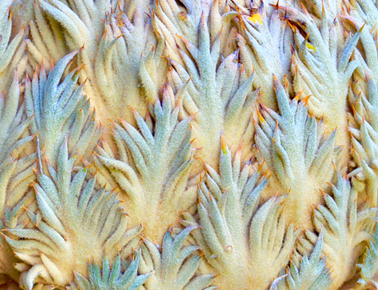 Cycad, beautiful and strange