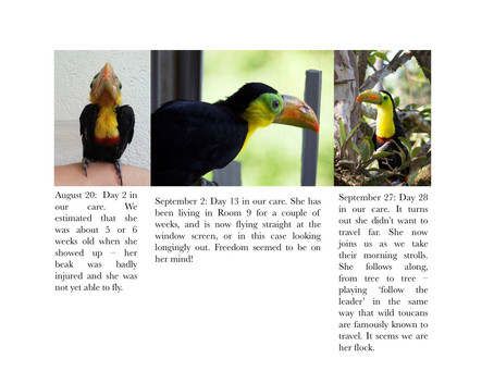 The Naming of Toucans
