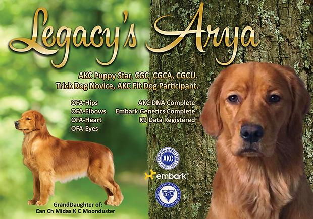 Arya3.png
