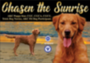 Chasen-the-Sunrise-beach.png