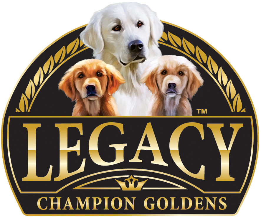 Puppies | Legacy Champion Goldens | United States