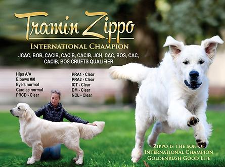 Tramin-Zippo2.png