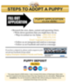 Steps-To-Adopt-a-Puppy2.png