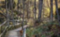 Frontenac_BoardwalkInTheWoods-825x510.jp